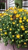 monarch-3